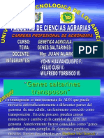 GENETICA . genes saltarines            jhon huamanquispe flores