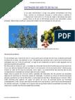 35410451 Producao de Azeite de Oliva
