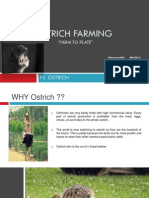 Ostrich Farming ( FARM to PLATE) Final