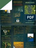 Folder Morcego