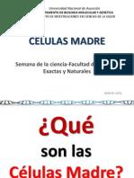 2014 Células Madre