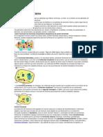 Sistema endocrino.docx