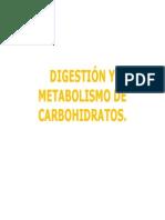 CM4+Digestion+y+Metabolismo+Carbohidratos+[Modo+de+compatibilidad]