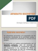 Aparato Excretor MEDICINA (3)
