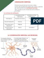 Neurona Alas Peruanas