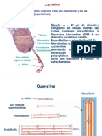proteínasglobularesyfibrilares2014