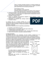 Levadura - Generalidades
