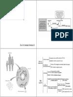 I-3 Genoma, Cromat, Estr RNA (B y N)