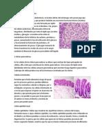 5 Tipos de Celulas 1ro Medio