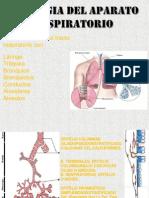 Citolologia de Tracto Respiratorio