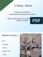 226223_Anatomia Veterinária I Esqueleto (1)
