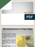 Algas y Virus
