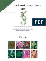 2.3 DNA – Transcripción y Traducción