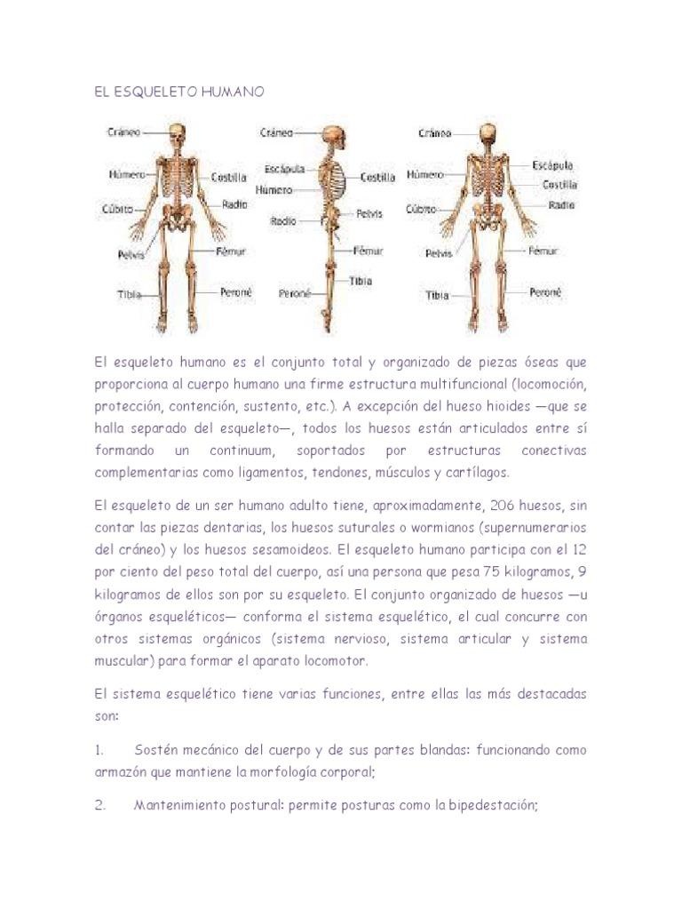 Bonito Estructura ósea Cuerpo Ideas - Imágenes de Anatomía Humana ...