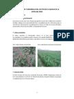Proyecto Quinua Web Cepdep
