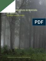 BosquesMesofilos Montana Baja