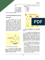estructura acidos nucleicos