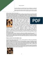 99179955-manual-de-apicultura-1-121217054141-phpapp02