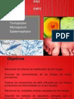 Clase Micología 2013