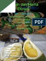 Durian Dan Hama Durian