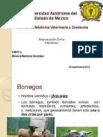 reproduccionovina-121031160748-phpapp01