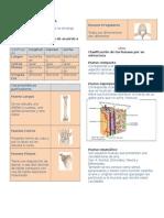 2. Osteología