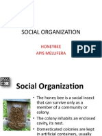 Social Organization_Caste of Honeybee-Moog 2013