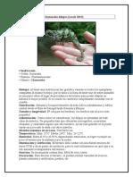 Ficha Técnica C. Dilepis