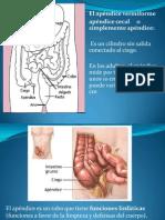 apendice.pptx