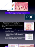 Integumentary Lecture