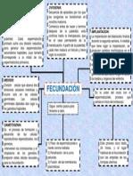 mapa conceptual fecundacion-implantacion.pptx