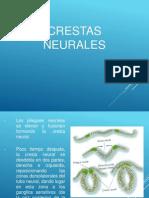 Larsen pdf humana embriologia