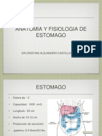 anatomia quirurgica de estomago