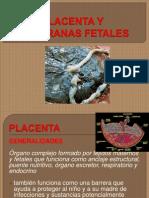 Exposicion Placenta SPFPL