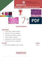 Sem. de Patología (2)