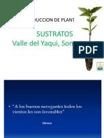 tecnologia de produccion Plantulas en el valle del yaqui.ppt