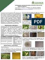 caracterizacionfitonardo.pdf