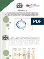 Presentacion Clase Nucleotidos