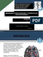 bronquiosintrapulmonares-130306130009-phpapp01