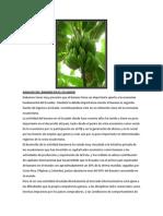 Analisis Del Banano en El Ecuador