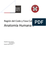 Región Del Codo y Fosa Cubital (1)