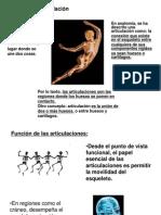 Clase Articulaciones2014