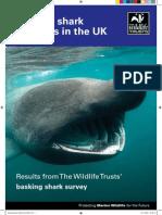 Basking Sharks report UK