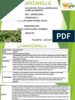 Usos y Beneficios de La Manzanilla