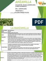 Usos y Beneficios de La Manzanilla 1