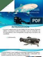 Inmunología de los peces.pptx