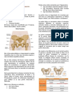 Clase 01 - Anatomia
