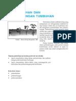 Pertumbuhan Dan Perkembangan Tumbuhan Materi Kelas 12 Biologi