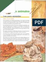 Tema 2- Los Animales