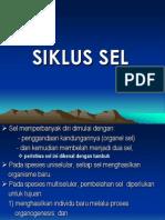 3. Siklus Sel S1